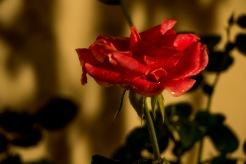 En la galería podrán encontrar algunas tomas de plantas después de la lluvia, espero las disfruten :)